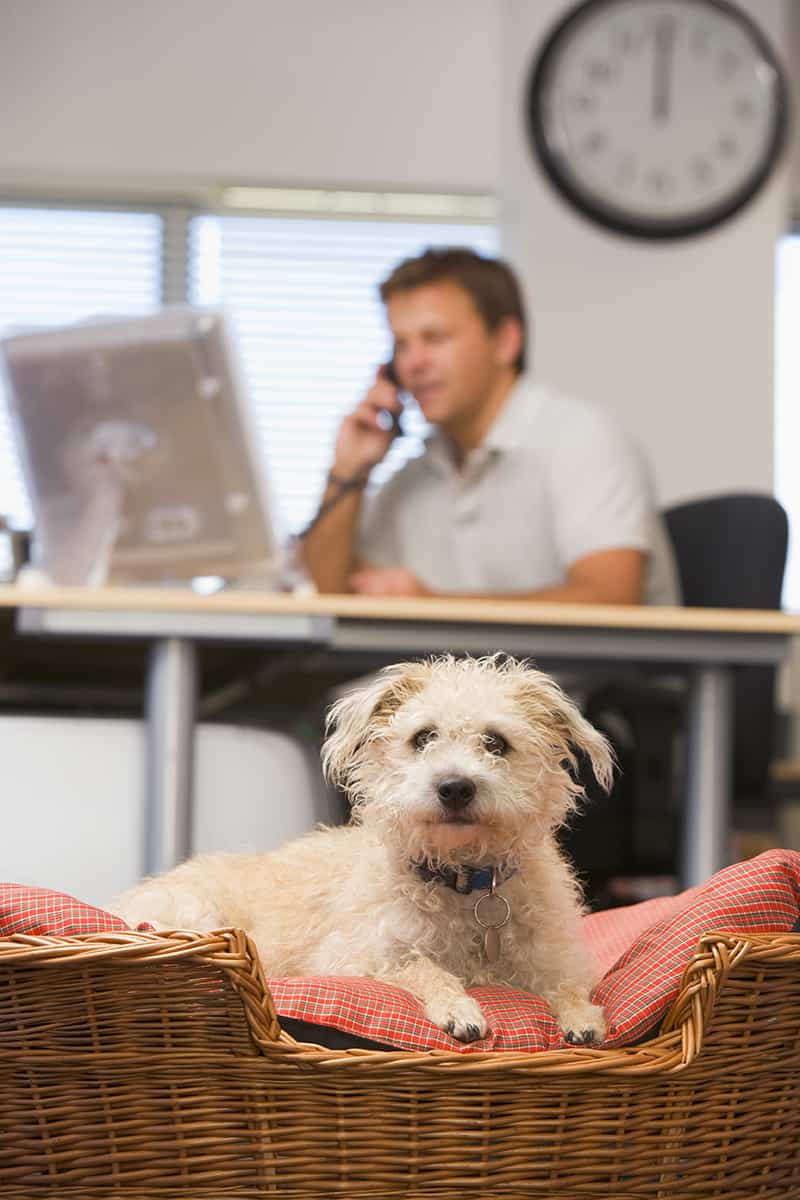 6 Benefits of Having a Pet-friendly Office Dog lying in office with man in background
