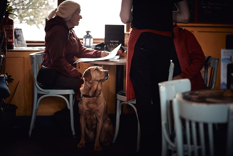 dog friendly cafe – waitress taking customer order