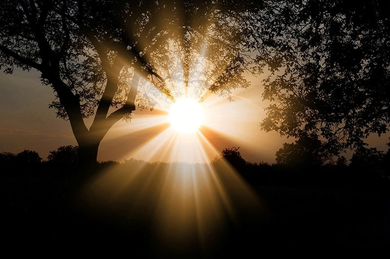 sun nature trees - dawn of a new day