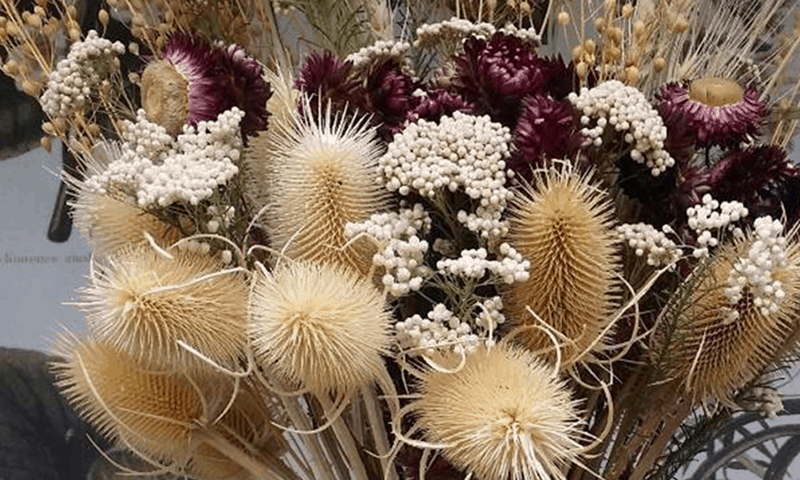 Dried flowers - flower business