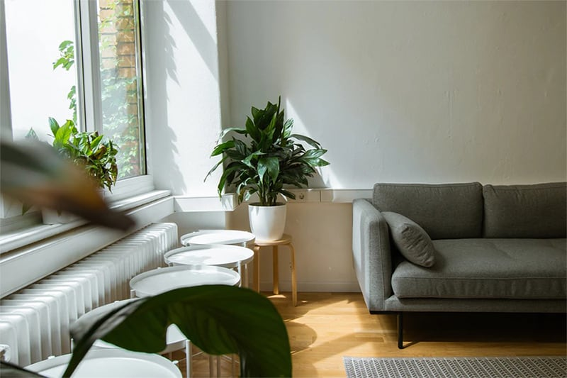 A living room with gray couch, white chairs and green leafy plants