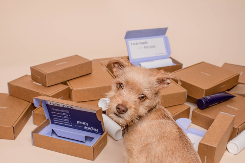 Dog next to pile of packages and mailing boxes for online business