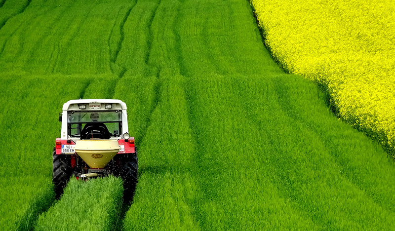 Rapeseeds field tractor